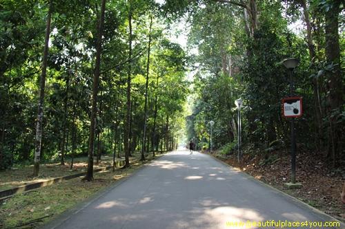 Bukit Batok Nature Park Nearest Mrt